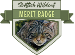 Merit Badge: Scottish Wildcats