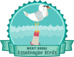 Merit Badge: Assateague Birds
