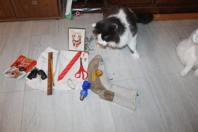 Pencil, Key Chain, Bag of Treats, Candle, Striped towel, Rubber band, Ruler, Light Bulb, Yellow Cat toy x 2, Scissors, Framed Photo, Ugly Sock IMG_8133